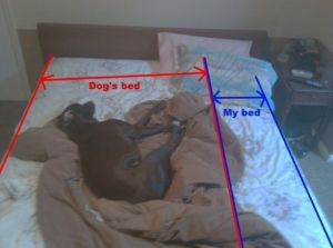 dogs-bed